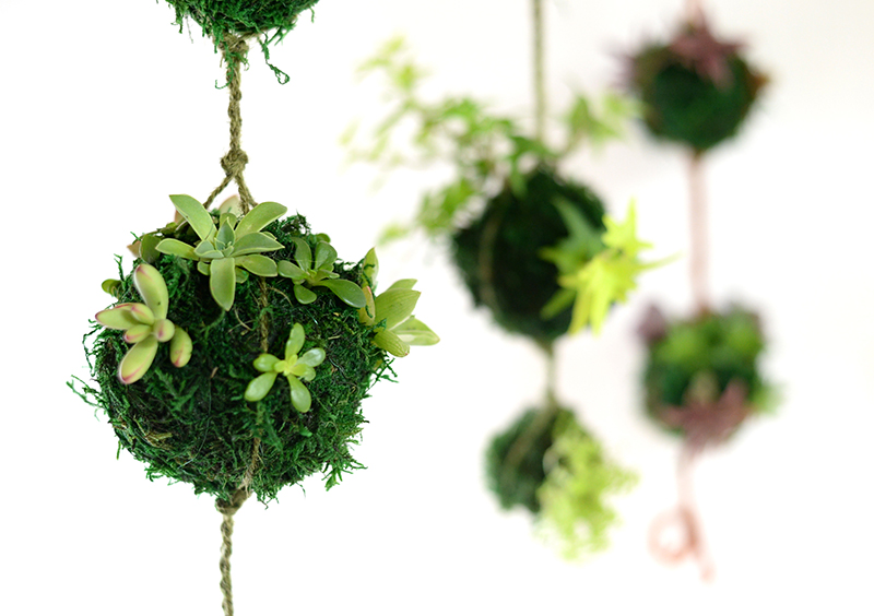 BONSAI BALL HANGING